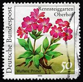 Postage Stamp Germany 1991 Wulfens Primel, Herbaceous Plant