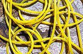 Yellow water hose