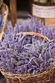 Lavender Bunches Selling In A Outdoor French Market