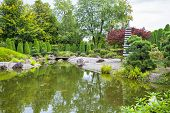 Green Pond In Japanese Garden In Bonn