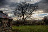 A Tree Against A Ark Grey Moody Sky In Snowdonia