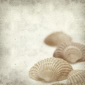 picture of cockle shell  - textured old paper background with cockle shells - JPG