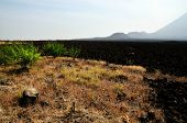 pic of vegetation  - Vegetation at the base of volcano near the burnt lava field - JPG