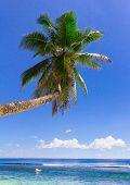 Palm Coconut Coast