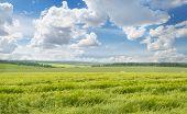 picture of fall-wheat  - A wheat field and blue cloudy sky - JPG