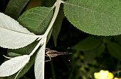 picture of cocoon tree  - Butterfly resting on the leave of a tree - JPG