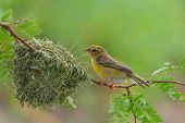 picture of bird-nest  - Bird and Bird Nest on the Tree - JPG