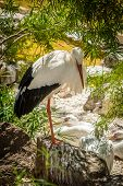 stock photo of stork  - Single stork in a zoo in the Palmitos park in Gran Canaria