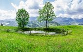 picture of mountain-range  - Small mountain lake on the meadow with grass and flowers and trees on the shore fenced by wood planks against the background of a mountain range - JPG