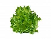 image of iceberg  - Green frillies iceberg lettuce isolated on white background - JPG