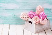 foto of blush  - Background with fresh blush pink hyacinths in wooden box on white wooden planks against turquoise wall - JPG