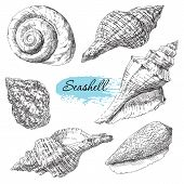 picture of scallop shell  - Beauty set of various sea shells vector - JPG
