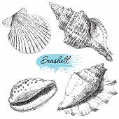 image of snail-shell  - Beauty set of various sea shells vector - JPG