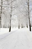 picture of slippery-roads  - the small road photographed in a winter season - JPG