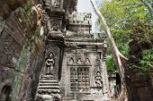 picture of premises  - Premises of the Ta Prohm Temple in Siem Reap - JPG