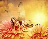 image of pixie  - Beautiful sexy woman pixie with wings lies on a summer flower at summer - JPG