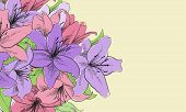 image of lillies  - floral illustration of lilly flowers - JPG