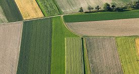 pic of land development  - Freshly plowed and sowed farming land from above neatly cultivated in non - JPG