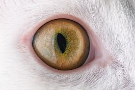 foto of extreme close-up  - Extreme beautiful close - JPG