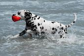 Dog And Red Ball On Beach