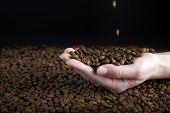 Falling Coffe Beans