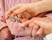 cutting senior's nails