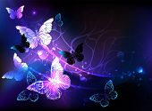 Black Background With Glowing Night Butterflies. Night Butterflies. Design With Butterflies. poster