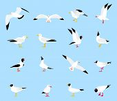 Sea Gull, A Beautiful Bird. Cute Bird In Cartoon Style. Floating, Standing And Flying Birds In A Fla poster
