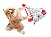 cat with shopping cart top view isolated on white