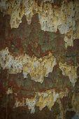 Damaged Rusty Wall