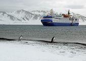 Penguins Watching Tourist Ship