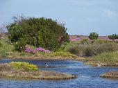 Seagull Pond