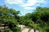 Valencia Turia garden