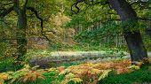 Autumn At The Tarn In Morralee Wood, At Allen Banks And Staward Gorge In The English County Of North poster