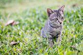 A Kitten On The Green Grass The Kitten Is Looking For Prey. The Kitten Is Playing On The Green Lawn. poster
