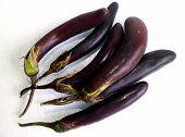 Japanese Eggplant (Solanum melongena)