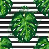 Seamless Pattern With Tropical Leaves: Palms, Monstera. Jungle Leaf Seamless Pattern Striped Backgro poster