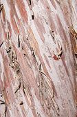 Arizona Smooth Cypress Bark