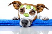 stock photo of bathing  - Dog With A Beauty Mask and cucumber - JPG
