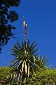 Morbihan Gulf - flora