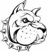 pic of bull head  - vector image of head of bull dog team mascot isolated on white background - JPG