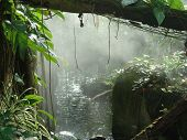 pic of tropical rainforest  - this is a picture that looks straight out of the rainforest - JPG