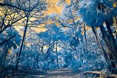 false color infrared photo of forest