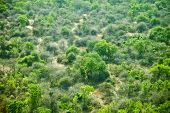 low aerial shot of wilderness in south sudan
