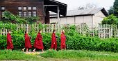 Buddhist novices walk to collect alms