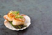 Studio closeup of seared scallops, garnished with pea shoots and served on a bed of asparagus, presented on a scallop shell. Over slate background with space for your text