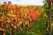 Mosel Vineyards Region In Autumn In Germany .