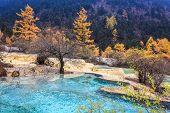 Travertine Ponds In Autumn Forest