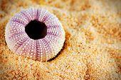 Sea Urchin Shell On Sand