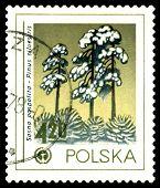 Vintage  Postage Stamp. Scotch Pine, Environment Emblem.
